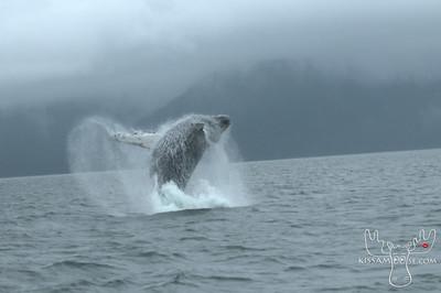 Dolphin Jet Boat Tours Juneau, Alaska
